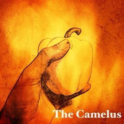 The Camelus