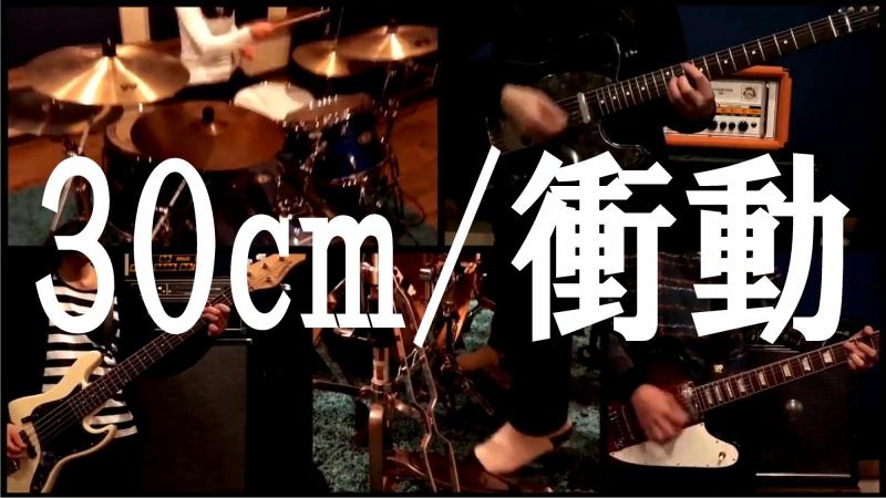 スマトラブラックタイガー公式「30cm/衝動」目コピ動画