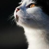 cat_night